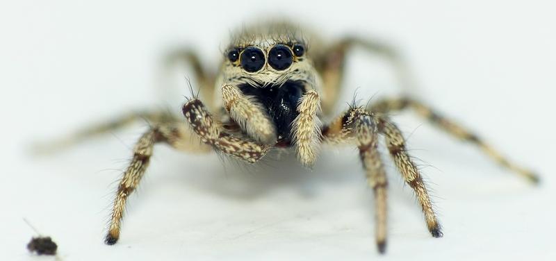 Penmarc'h 3 - Pour vous réconcilier avec les (petites) araignées... 16_06_14