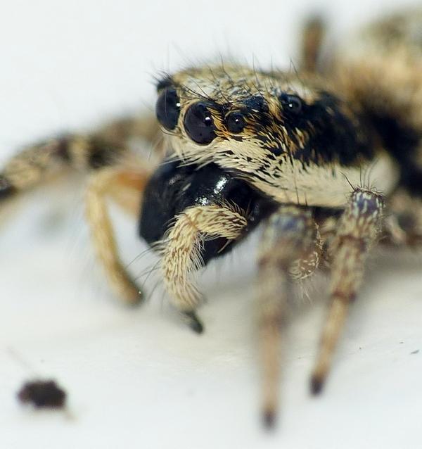 Penmarc'h 3 - Pour vous réconcilier avec les (petites) araignées... 16_06_15
