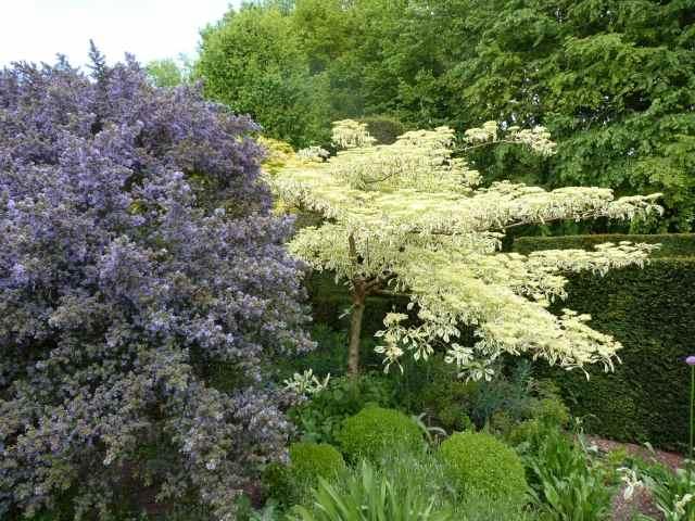 Le Jardin de Castillon P1140913