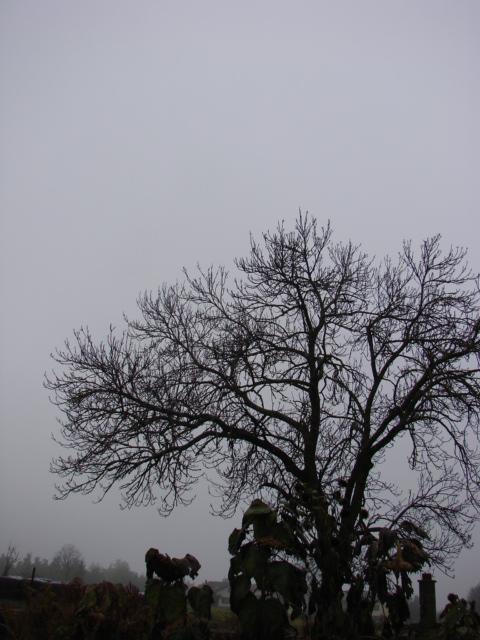 Le temps à Madelonnet du mois de novembre 2007 133