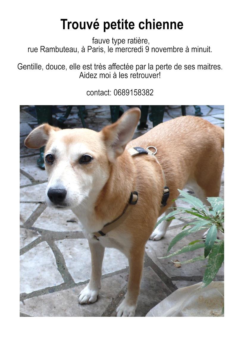 trouvé petite chienne Paris Rambuteau - A RETROUVE SES MAITRES - Chienn11