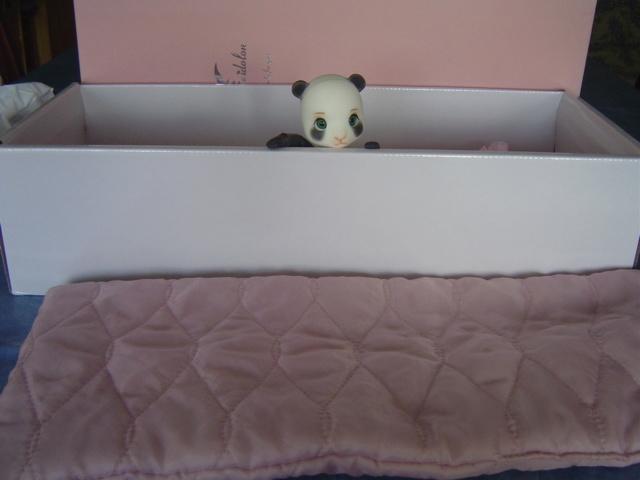 [Vente]Chat Baha Pipos caramel/Panda Asleep Eidolon Dsc03512