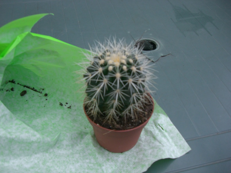 Mon cactus Cimg3910