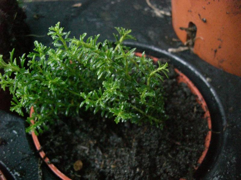plantes succulentes et autres Cimg4015