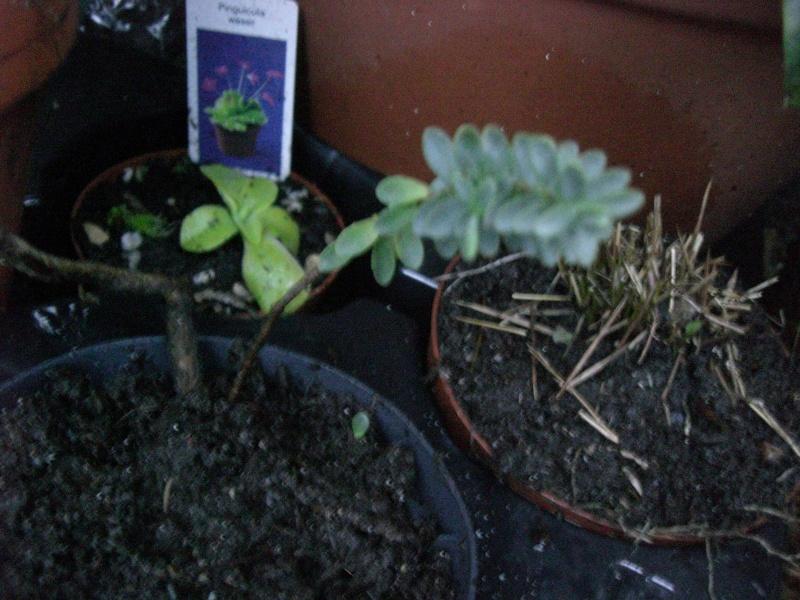plantes succulentes et autres Cimg4016