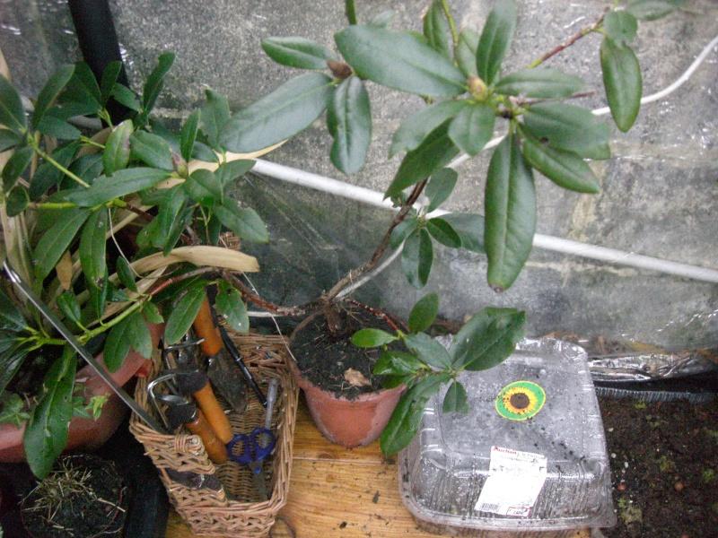 plantes succulentes et autres Cimg4017