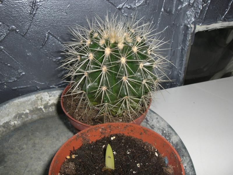 plantes succulentes et autres Cimg4021