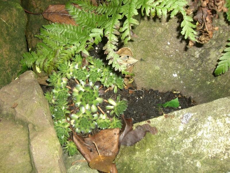 plantes succulentes et autres Cimg4023
