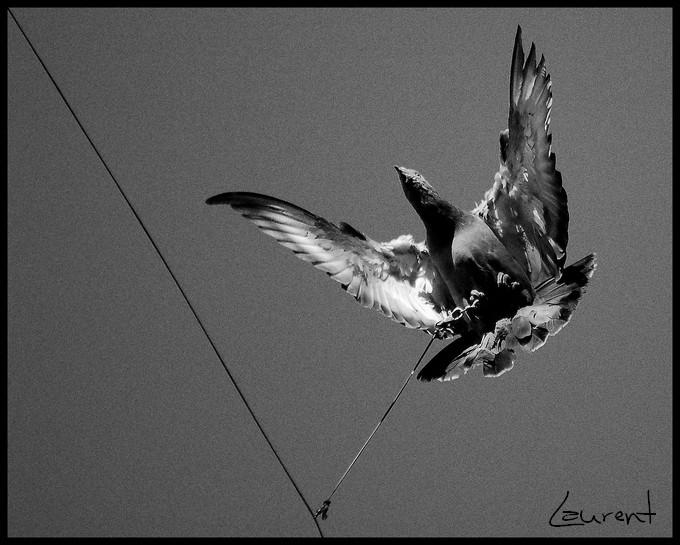 volant sur fil Volant10