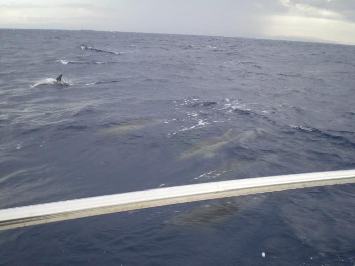 Mare mosso,pioggia e nuvole viola Delfin11