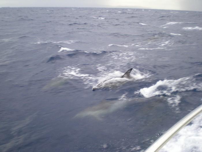 Mare mosso,pioggia e nuvole viola Delfin12