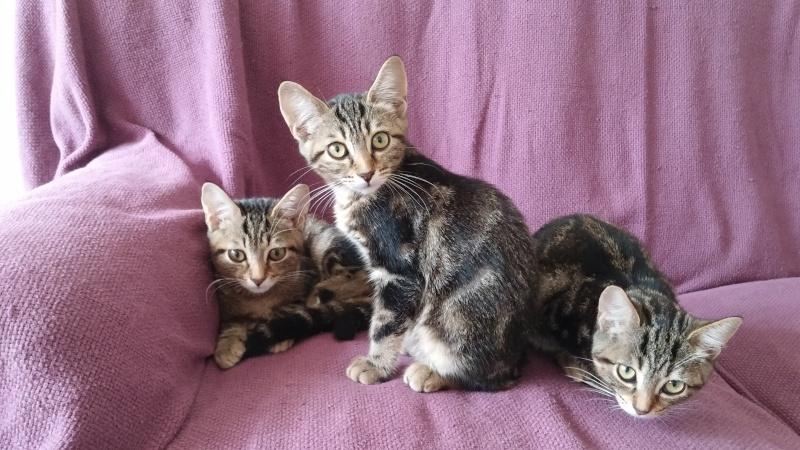 Luby-chatonne adoptée en septembre 2015 20150810