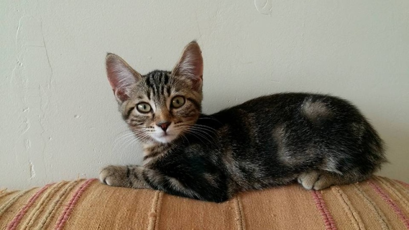 Lilou-chatonne adoptée en septembre 2015 Leelo110