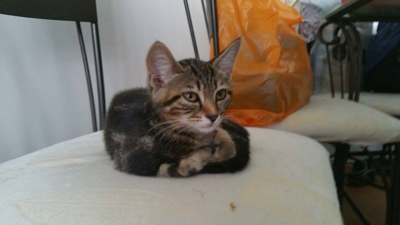 Lilou-chatonne adoptée en septembre 2015 Leelo310