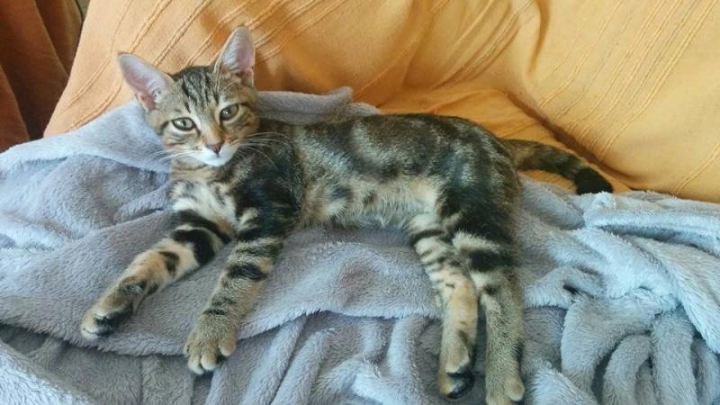 Looper-chaton adopté en septembre 2015 Looper11