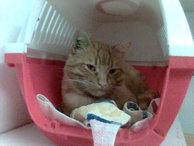mes photos du CLC Cat2010