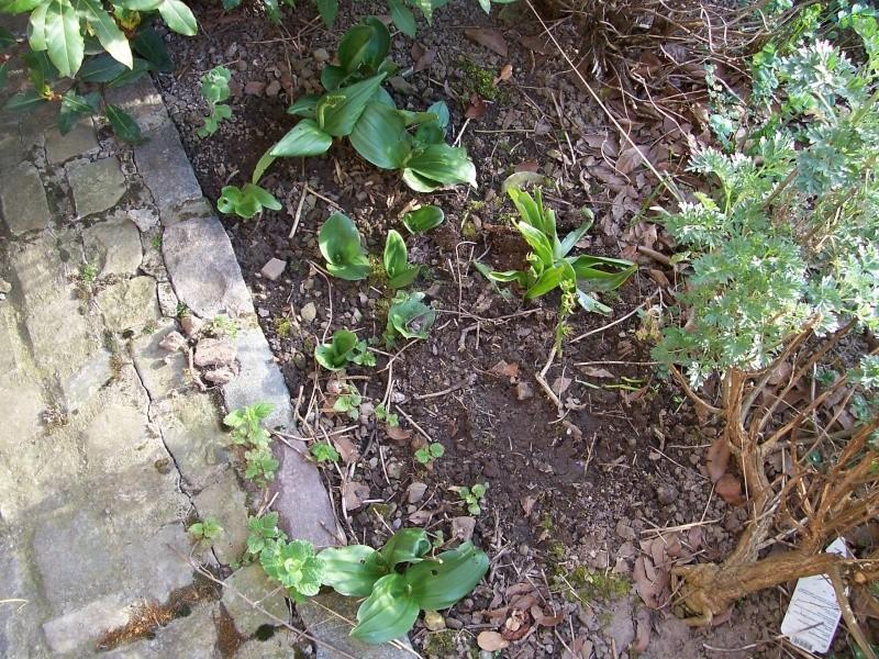 Les orchidées de mon jardin 100_1510