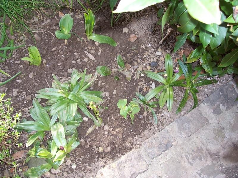 Les orchidées de mon jardin 100_1511