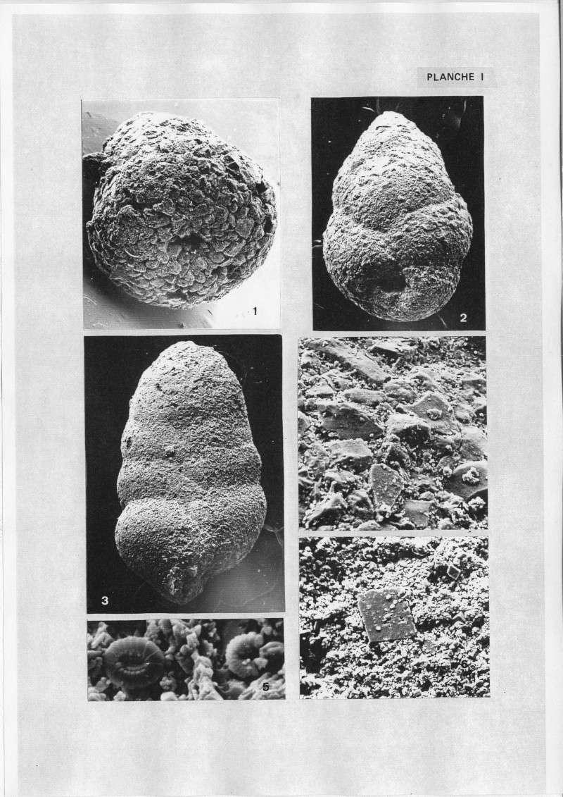 Extraction des microfossiles dans de la craie. Memoir11