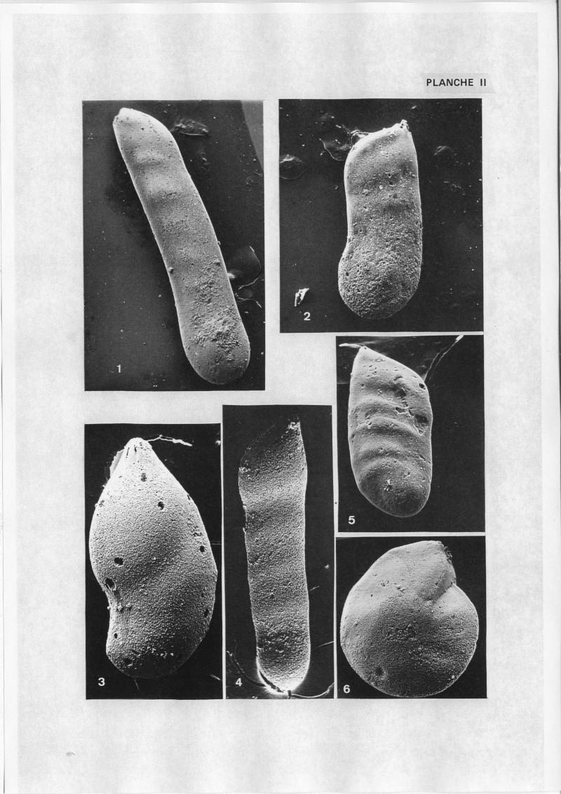 Extraction des microfossiles dans de la craie. Memoir13
