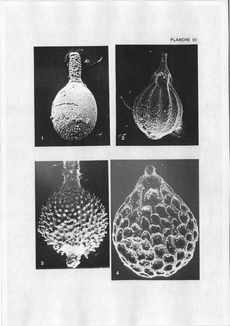 Extraction des microfossiles dans de la craie. Memoir15