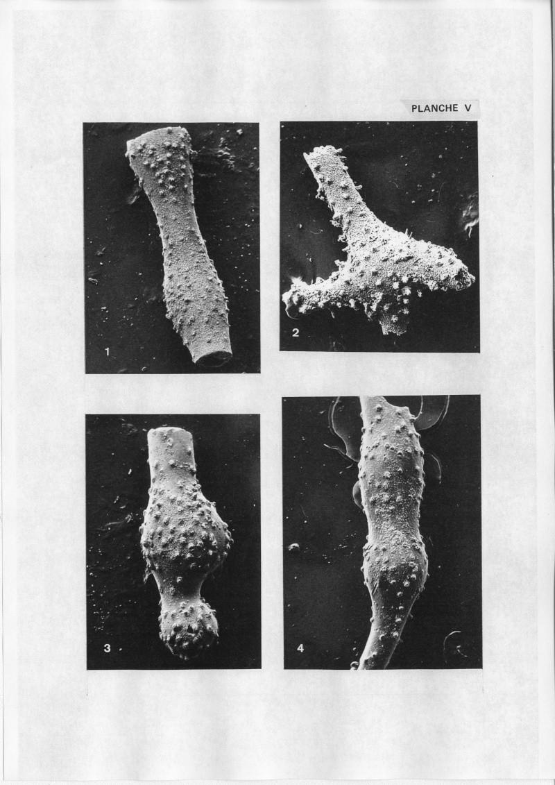 Extraction des microfossiles dans de la craie. Memoir19