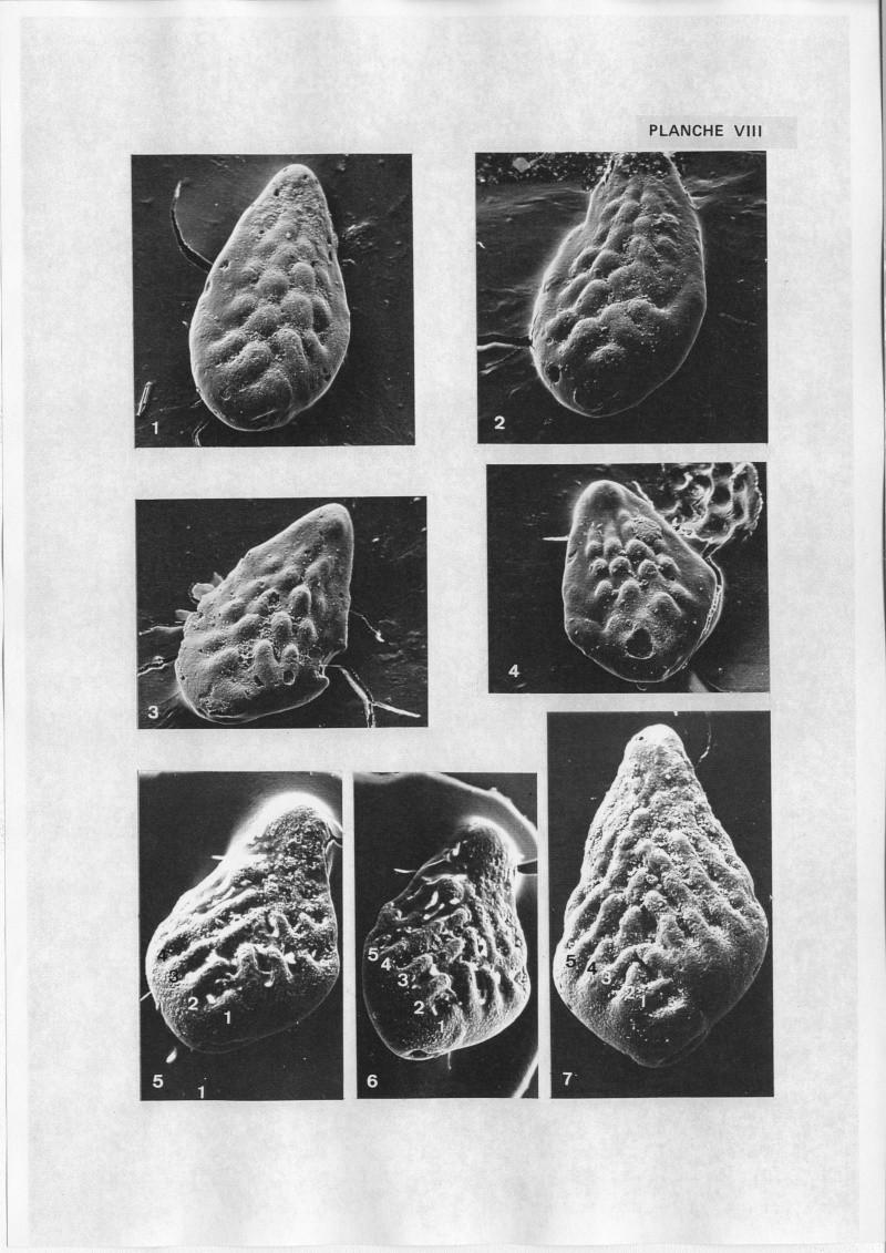 Extraction des microfossiles dans de la craie. Memoir25