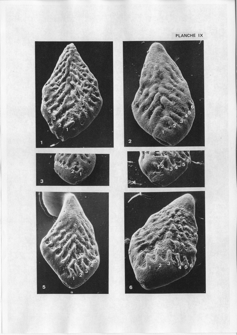 Extraction des microfossiles dans de la craie. Memoir27