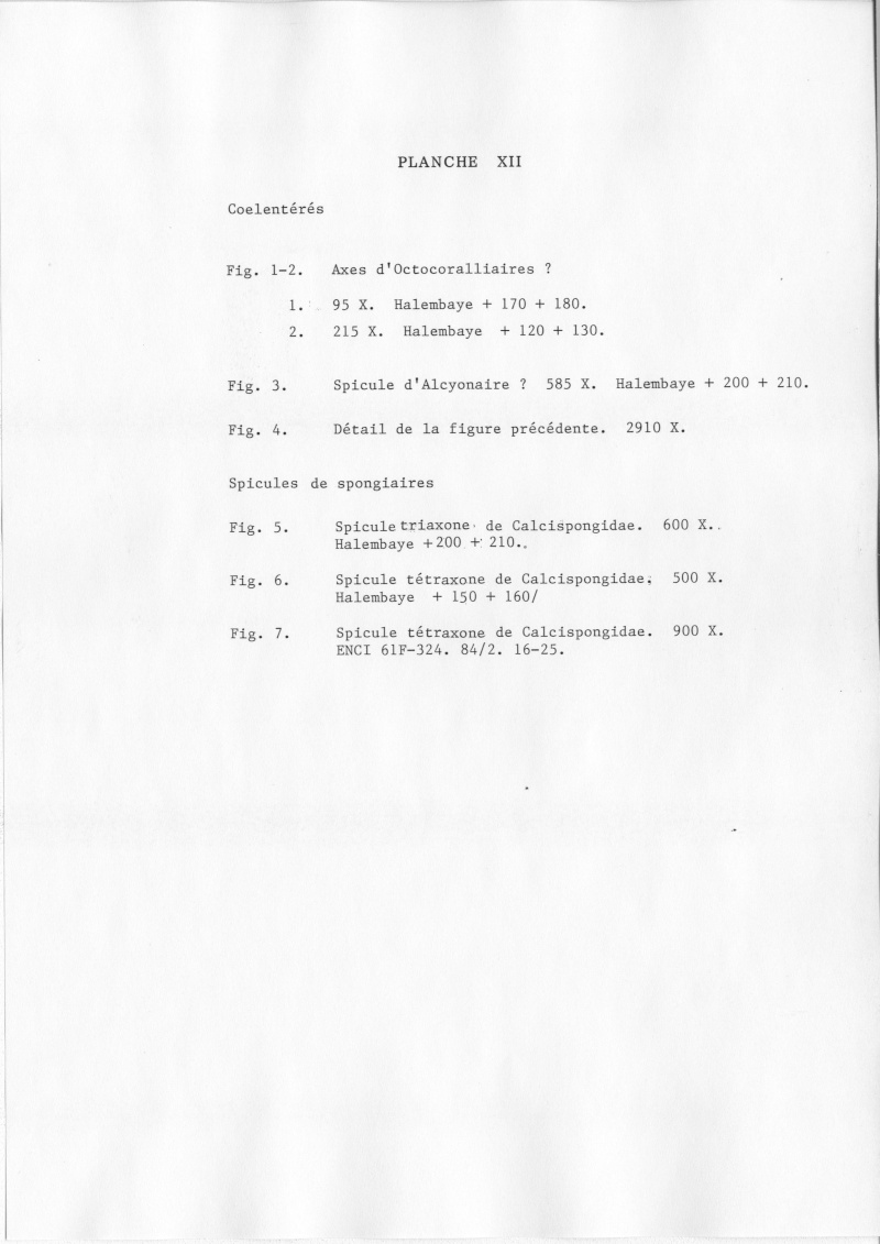 Extraction des microfossiles dans de la craie. Memoir32