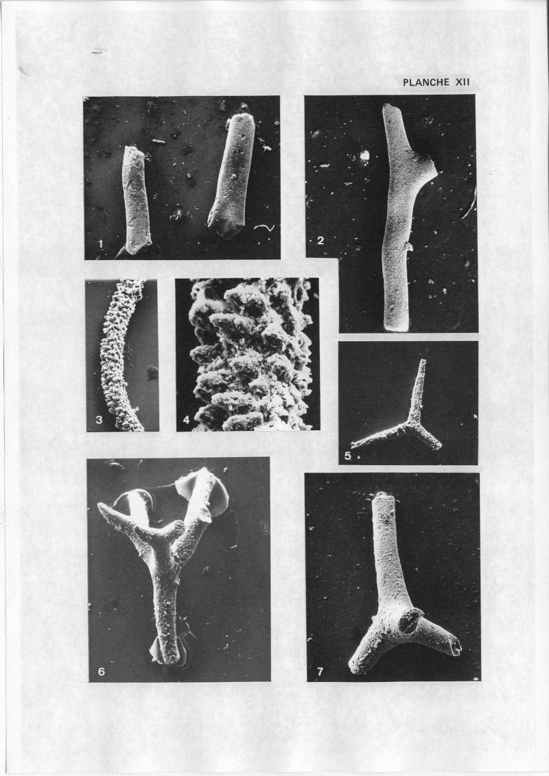 Extraction des microfossiles dans de la craie. Memoir33