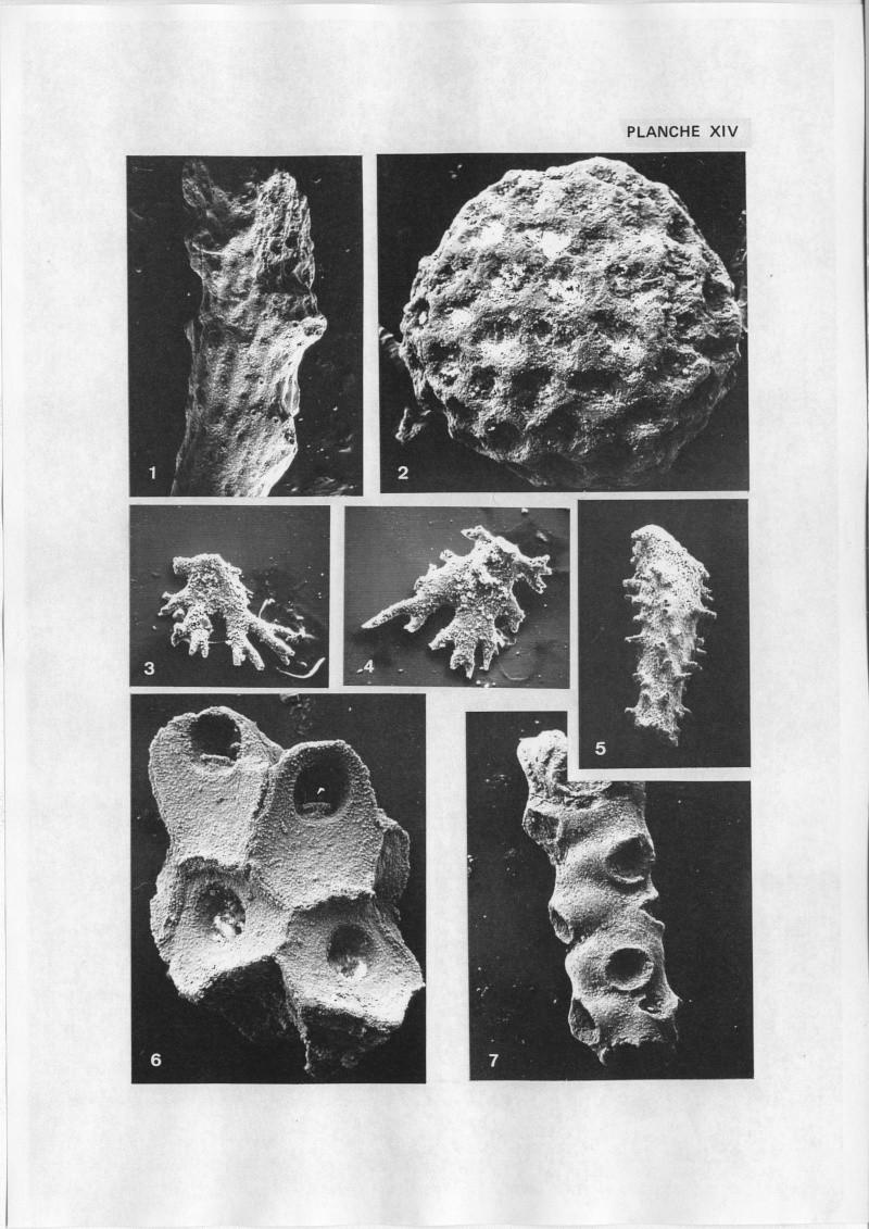 Extraction des microfossiles dans de la craie. Memoir37