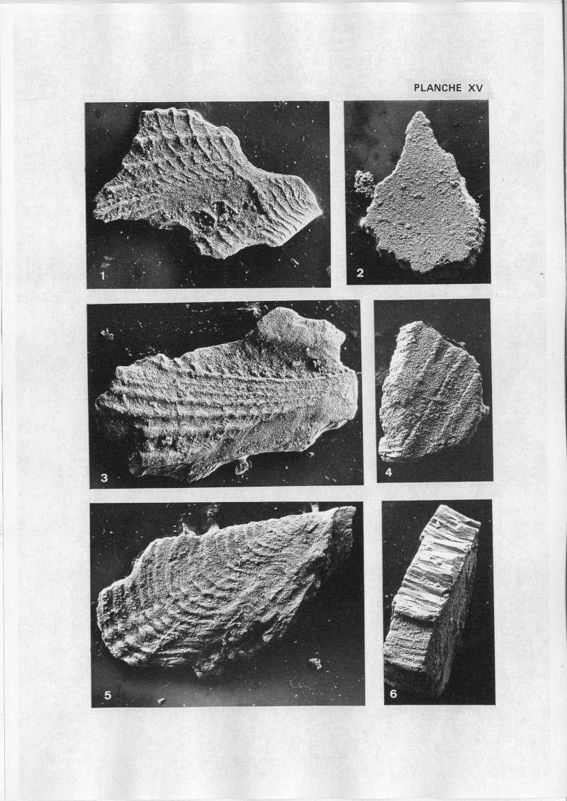 Extraction des microfossiles dans de la craie. Memoir39