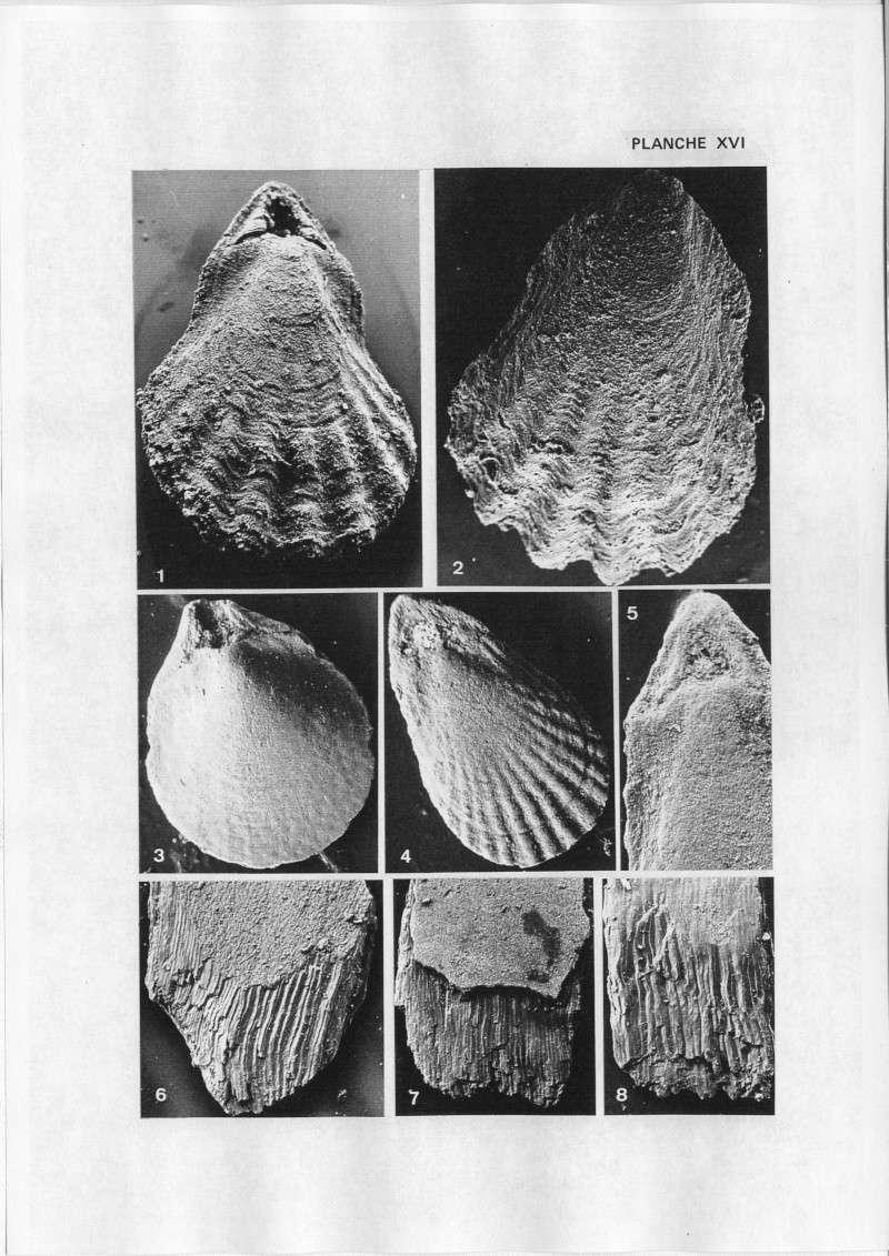 Extraction des microfossiles dans de la craie. Memoir41