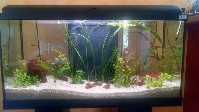Lancement dans l'aquariophilie Aqua_110