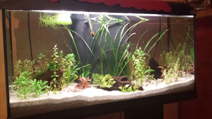 Lancement dans l'aquariophilie Aqua_311