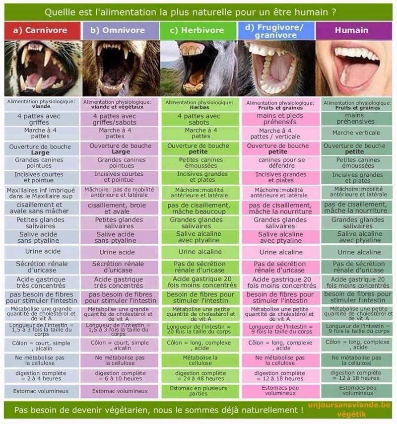 Encore une preuve que nous sommes végétariens et frugivores :-)  Encore10