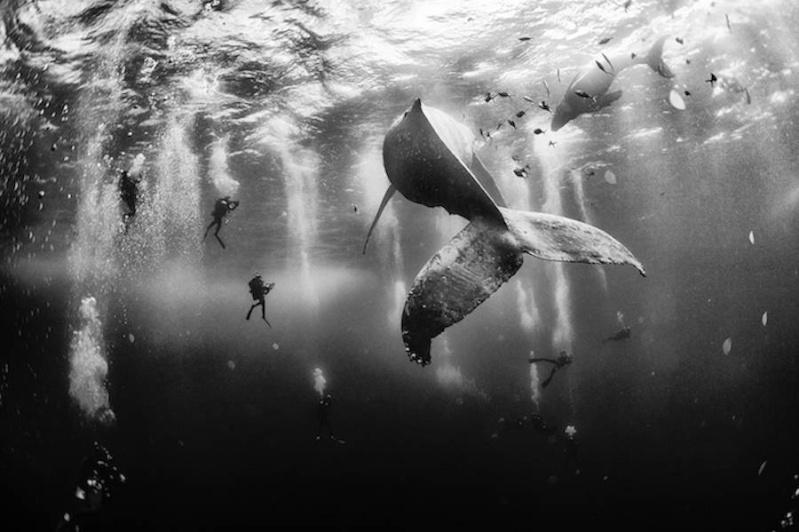 La baleine, dans tous ces livres... - Page 2 A497