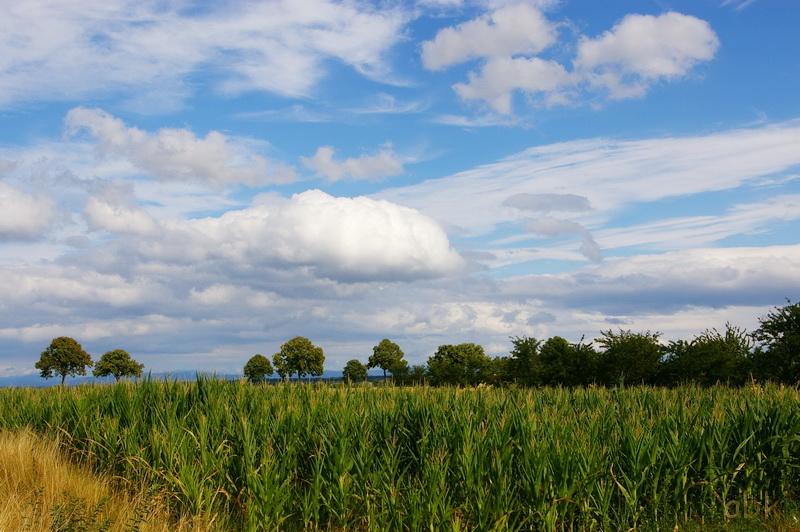 Verdure et nuages ( Alentours de Barr ) Boden_13