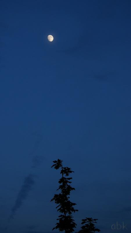Lune Lune_210