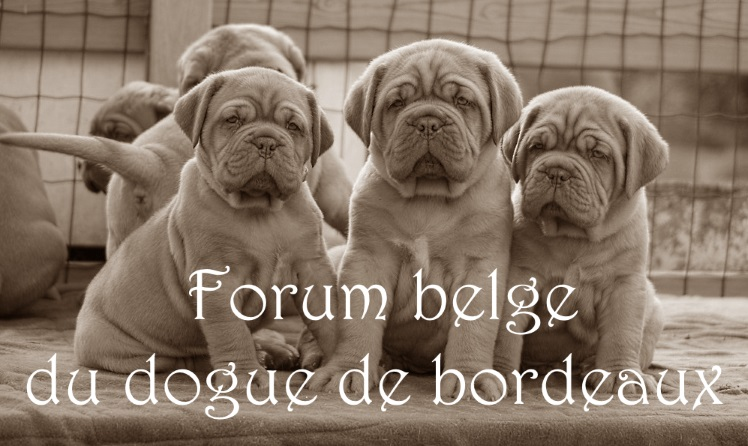 FORUM BELGE DU DOGUE DE BORDEAUX