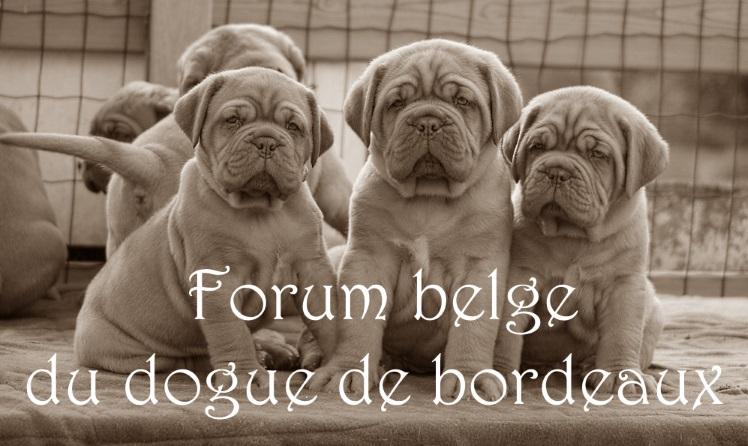 FORUM BELGE DU DOGUE DE BORDEAUX
