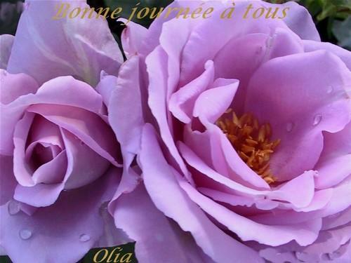 bonjours  bonsoirs du mois  juin  1jhjsf10