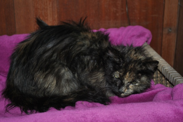 Kitty Cat, née le 1er août 2010 STATUT :CHAT LIBRE Dsc_0089