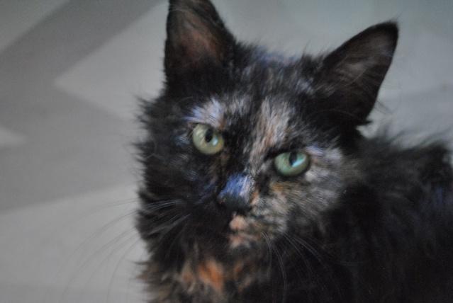 Kitty Cat, née le 1er août 2010 STATUT :CHAT LIBRE Dsc_0094