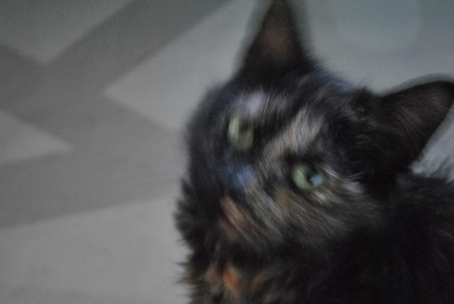 Kitty Cat, née le 1er août 2010 STATUT :CHAT LIBRE Dsc_0095