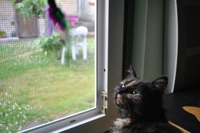 Kitty Cat, née le 1er août 2010 STATUT :CHAT LIBRE Dsc_0096
