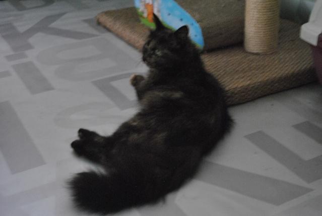 Kitty Cat, née le 1er août 2010 STATUT :CHAT LIBRE Dsc_0097
