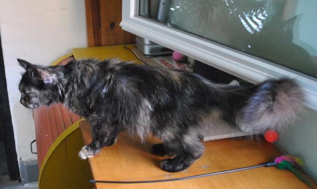Kitty Cat, née le 1er août 2010 STATUT :CHAT LIBRE Dsc_0098