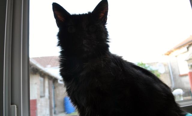 Kitty Cat, née le 1er août 2010 STATUT :CHAT LIBRE Dsc_0100