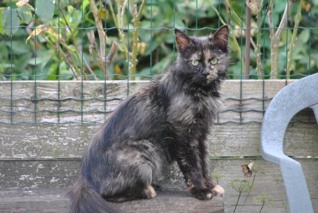 Kitty Cat, née le 1er août 2010 STATUT :CHAT LIBRE Dsc_0101